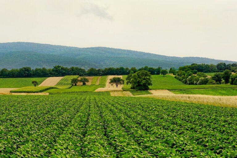 campos de trigo y zanahorias