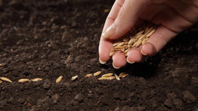 sembrar-semillas