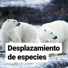desplazamiento de especies