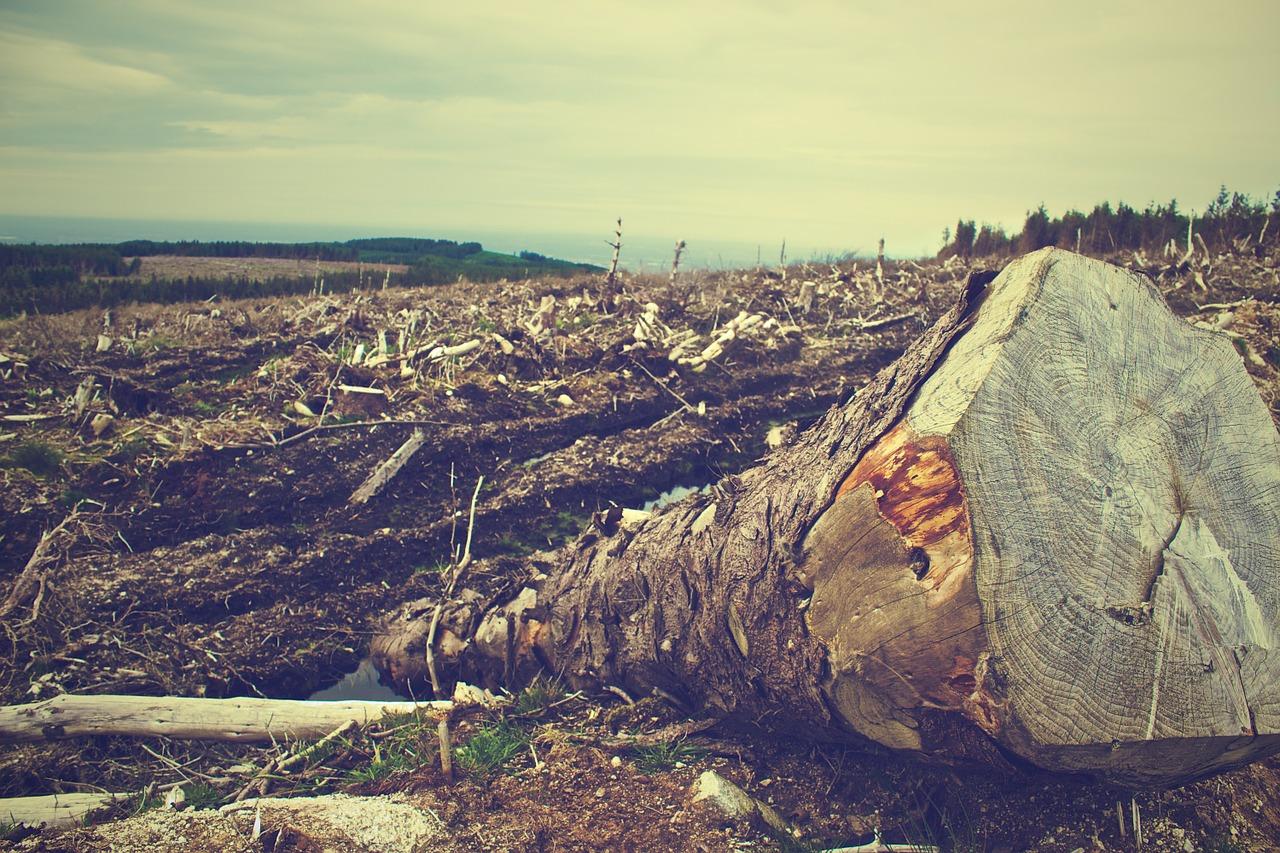 dos troncos de arboles cortados