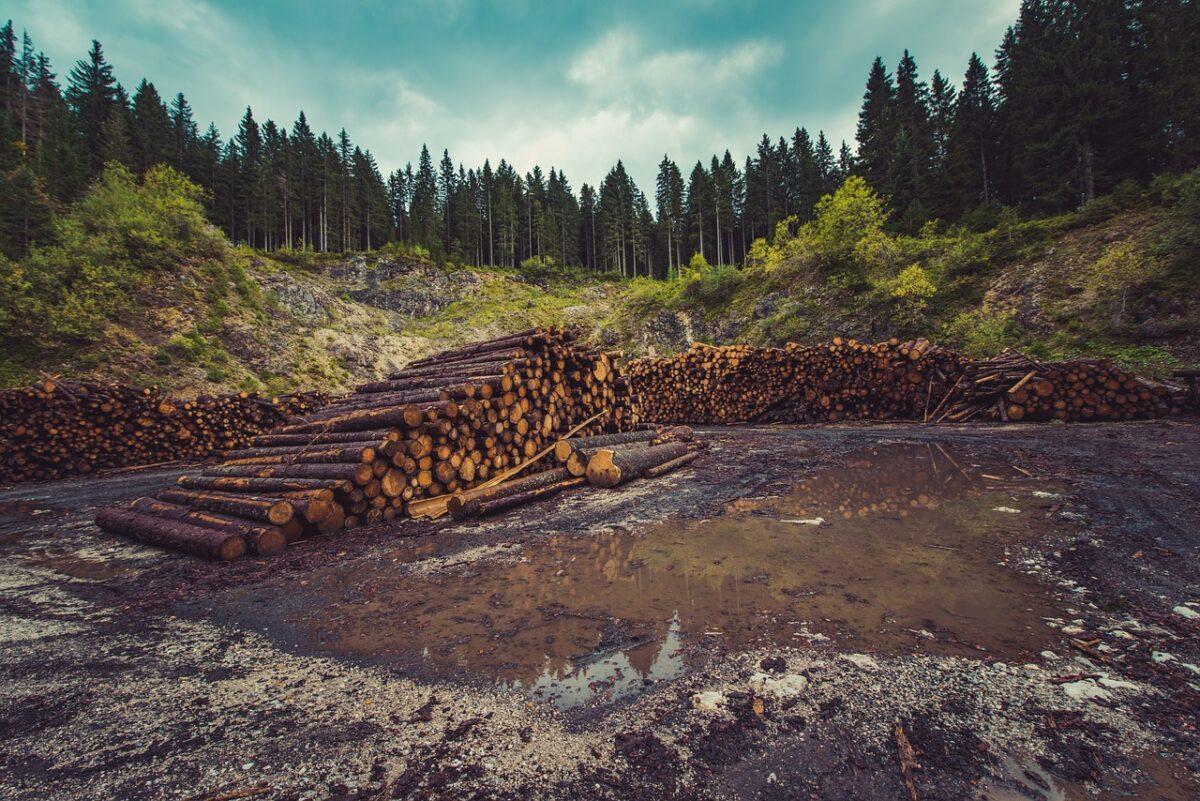 troncos de arboles cortados