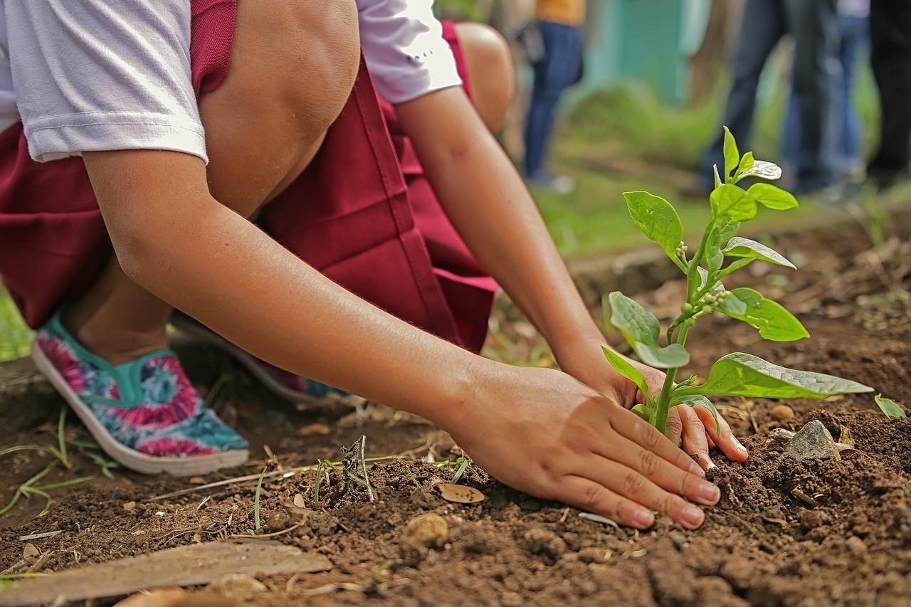 niña plantando un arbol