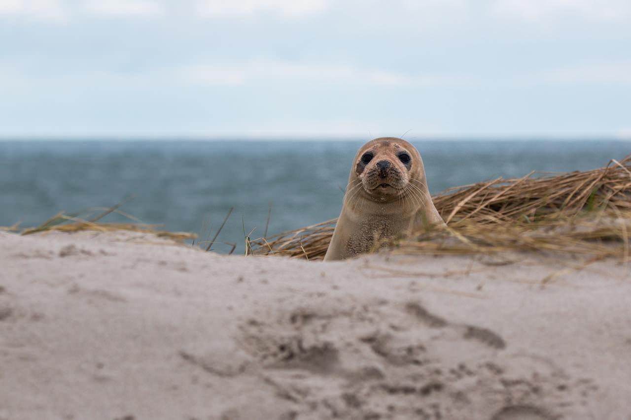 foca tierna mirando a la camara