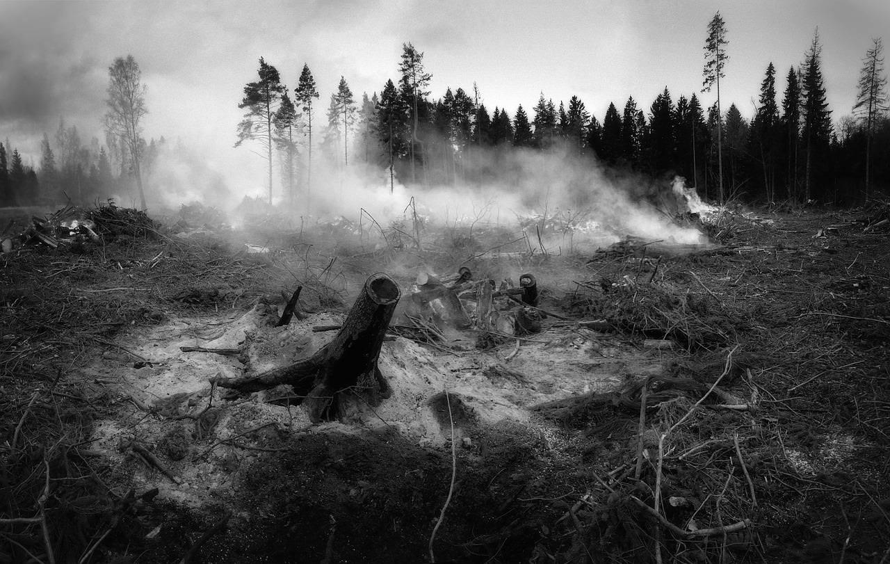 selva quemada despues de incendio forestal en blanco y negro