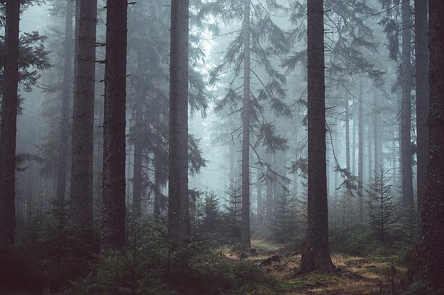 bosque-templado