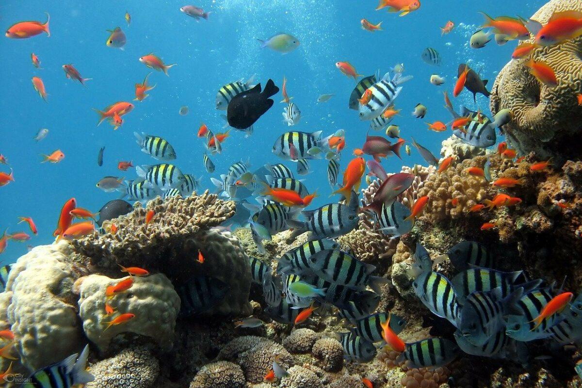 corales y muchos peces
