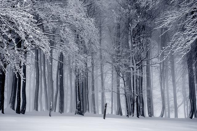 bosque-frio
