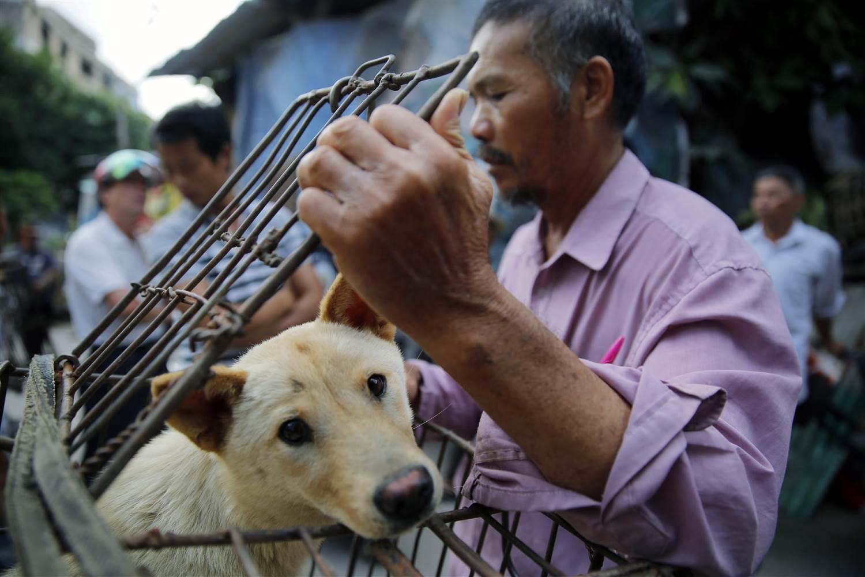 hombre en china enjaulando un perro