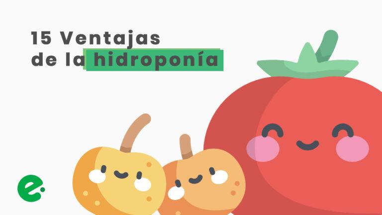 ventajas de la hidroponia