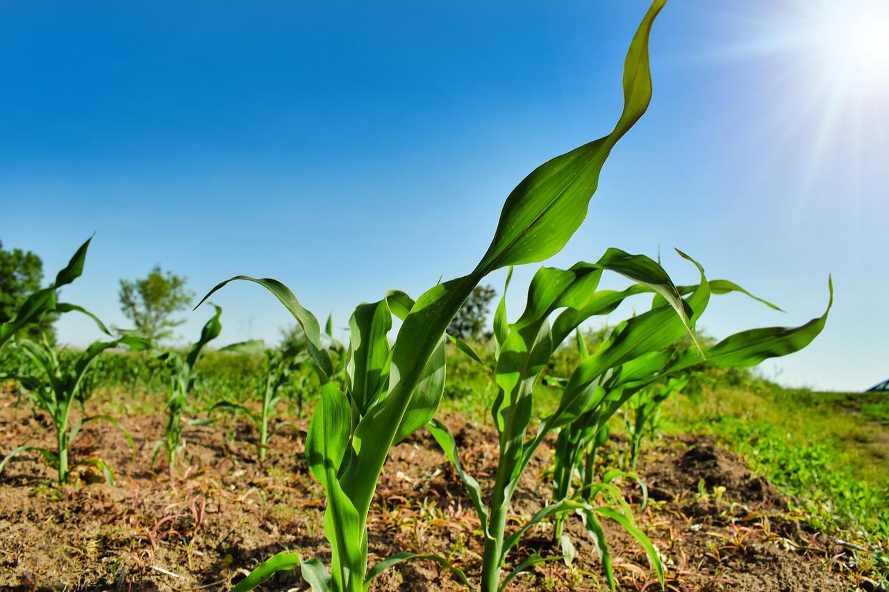 planta creciendo en un cultivo sostenible